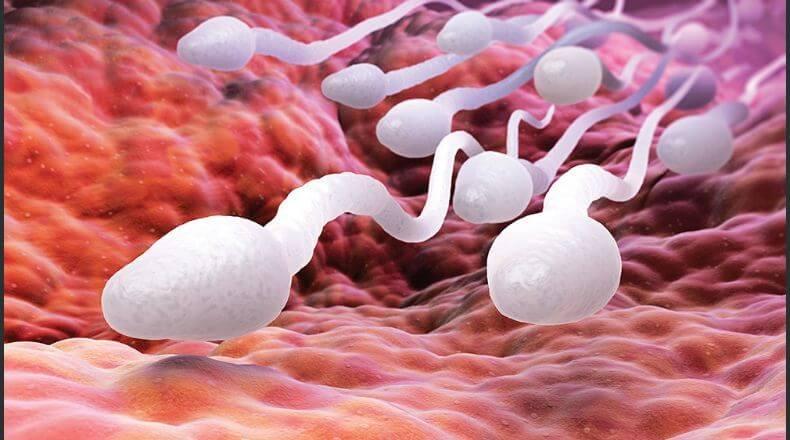 Как улучшить спермограмму народными средствами подготовка сдача рекомендации