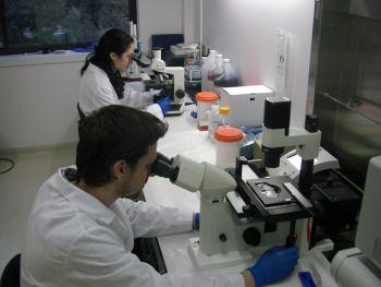Фото: спермограмма как собрать сперму